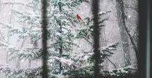 ● season: winter.