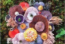 ● fungi friends.