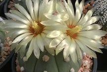 Pasión por los cactus