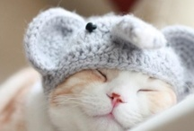 Adorable animals, make my day :)
