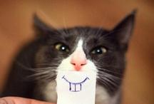 Have a laugh :)