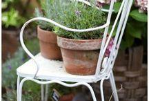 Garden & Outdoor / by Lynn De Giosa