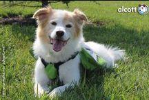 Wundervolle Hunde / beautiful dogs / Die schönsten und außergwöhnlichsten Hundefotos- Denn glückliche Hunde sind die besten Hunde.