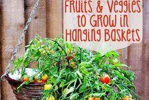 Garten / Keinen Grünen Daumen? Kein Problem: Hier werden Ideen und Inspirationen für den Garten gesammelt. Ob das richtige Pflanzen oder das richtige Pflegen. :)