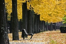 Fall / Fall, Decor, Cleaning, DIY Crafts, Bellabay Realty, Grand Rapids, Michigan, For the Home