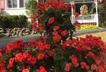 Lamplight Inn B&B / Affordable luxury bed and breakfast in Lake Luzerne, southern Adirondacks of New York State.