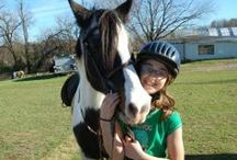 Our School Horses / Meet our wonderful horses and ponies.  They are the stars of our Center!!