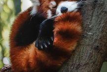 itz jutz too too cute. Animal babies / All animal babies. / by Teresa & Jessica
