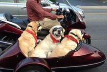 Dogs /Hunde / En masse søde billeder af hunde