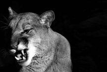 Animals / Le più belle foto degli animali trovate in rete :3