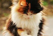Katzen / Süße kätzchen