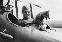 World War I Animals