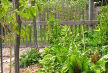 On the vine / Edible gardens