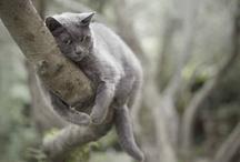 """cats / """"The smallest feline is a masterpiece.""""  ― Leonardo da Vinci"""