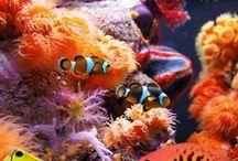 Peces y corales