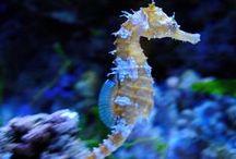 Caballitos y dragones de mar