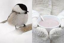winter/Christmas time