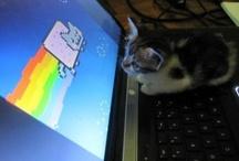 ❤ My Nyan Cat Obsession ❤ / Nyan Nyan Nyan Nyan Nyan Nyan Nyan Nyan Nyan Nyan Nyan Nyan Nyan Nyan Nyan Nyan Nyan Nyan Nyan Nyan  / by Xianspamza