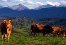 Asturias, paraíso natural / Asturias, paraiso natural Gastronomía, arte, historia, naturaleza, montaña, playas...