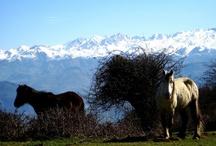 Asturias, Fauna autóctona