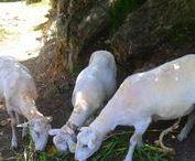Mascotas y animales del entorno / Pets and other animals
