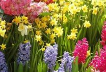 Celebrate Spring / Spring gardens and landscapes coming to life!