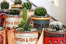 Cactus ^^