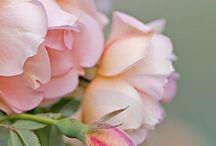 bloeiend & groeiend