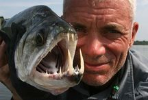 River Monsters / Jeremy Wade is awesome