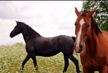 Horses / surprisingly about horses