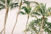 Rosalita / Bahamas / by theresa mersky