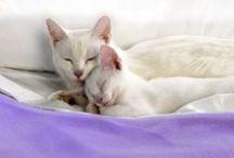 CATS ANIMALS IMAGES MISCELLANEOUS / GATOS DE IMÁGENES DE ANIMALES