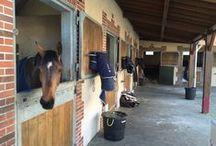 Écurie Équipol / Equipol propose aux cavaliers et aux propriétaires qui nous confieront leurs chevaux un univers d'entraînement professionnel, une structure novatrice dans le respect de la culture équestre.