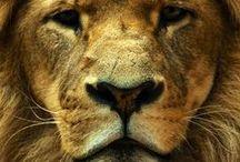 19.1. Fauna. Animals - my love.