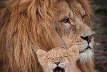 19.2. Fauna. Animals. Family.