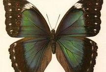 6.3. ART. GRAPHICS. Easel graphics. Entomology.