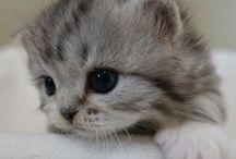 19.3. Fauna. Cats, kitty... Lovely!