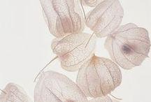 WEDDING  | Botanical / Inspiration for a botanical themed wedding.