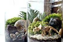 Pomysł na terrarium
