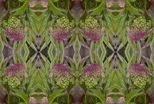 : poetic☚Woods : / Bibbity Bobbity Boos of Everything in Purple/Olive & Rose Combo.