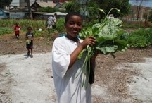 Our Programs / Angelic Organics Learning Center programs to Learn, Grow, Connect.  www.learngrowconnect.org