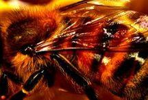 Honey / 101 Uses for Honey