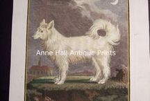 Cat and Dog Prints / Fantastic OLD Illustrations of our Compatible Canines and Felines.  Old hand colored engravings and lithographs of cats and dogs!