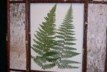 Flora Prints / Antique Prints of Ferns, Palms, Plants, etc.