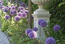 My beautiful garden / Záhrada, pestovanie, inšpirácie.