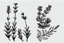 Motywy roślinne