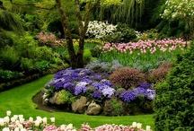 Beautiful flower gardens / by Darryn Staveley