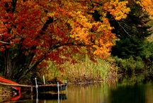 The colors of Autumn / by Darryn Staveley