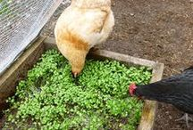 Animal Care Tips / Venturing into the world of animal care? Here you'll find pins with tips on excellent animal care.
