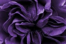 Purple Passion / Everything and anything purple, mostly violet though...
